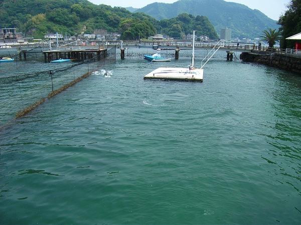淡島 (1).jpg
